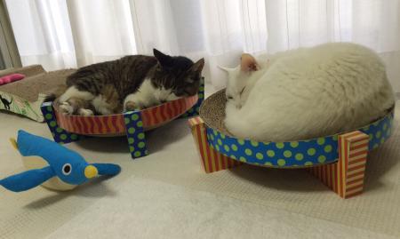 2匹でお昼寝