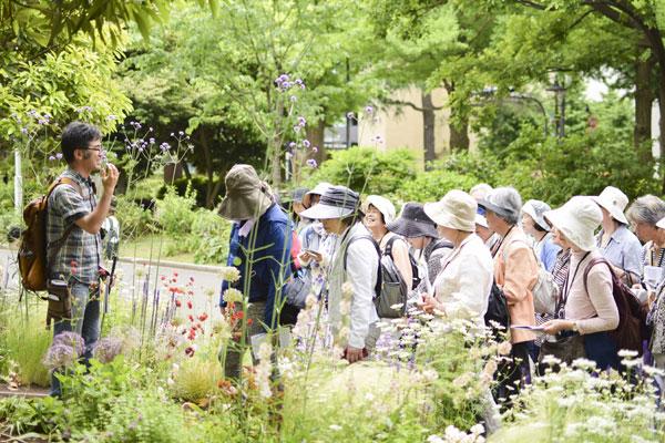 「清右衛門の草花散歩」は毎月開催!