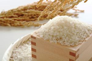 お米の品種って、何種類あるの?