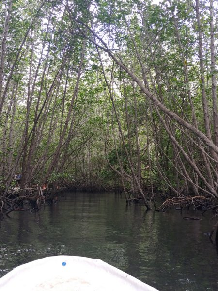 バリのマングローブ林