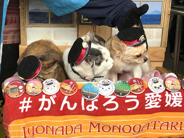 2便、4便で出会える犬駅長と猫「福」駅長