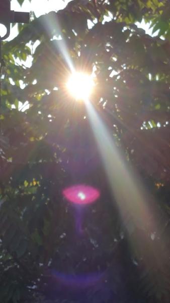 7月末、強い日差しが照りつける中我が家の夏は終わろうとしている