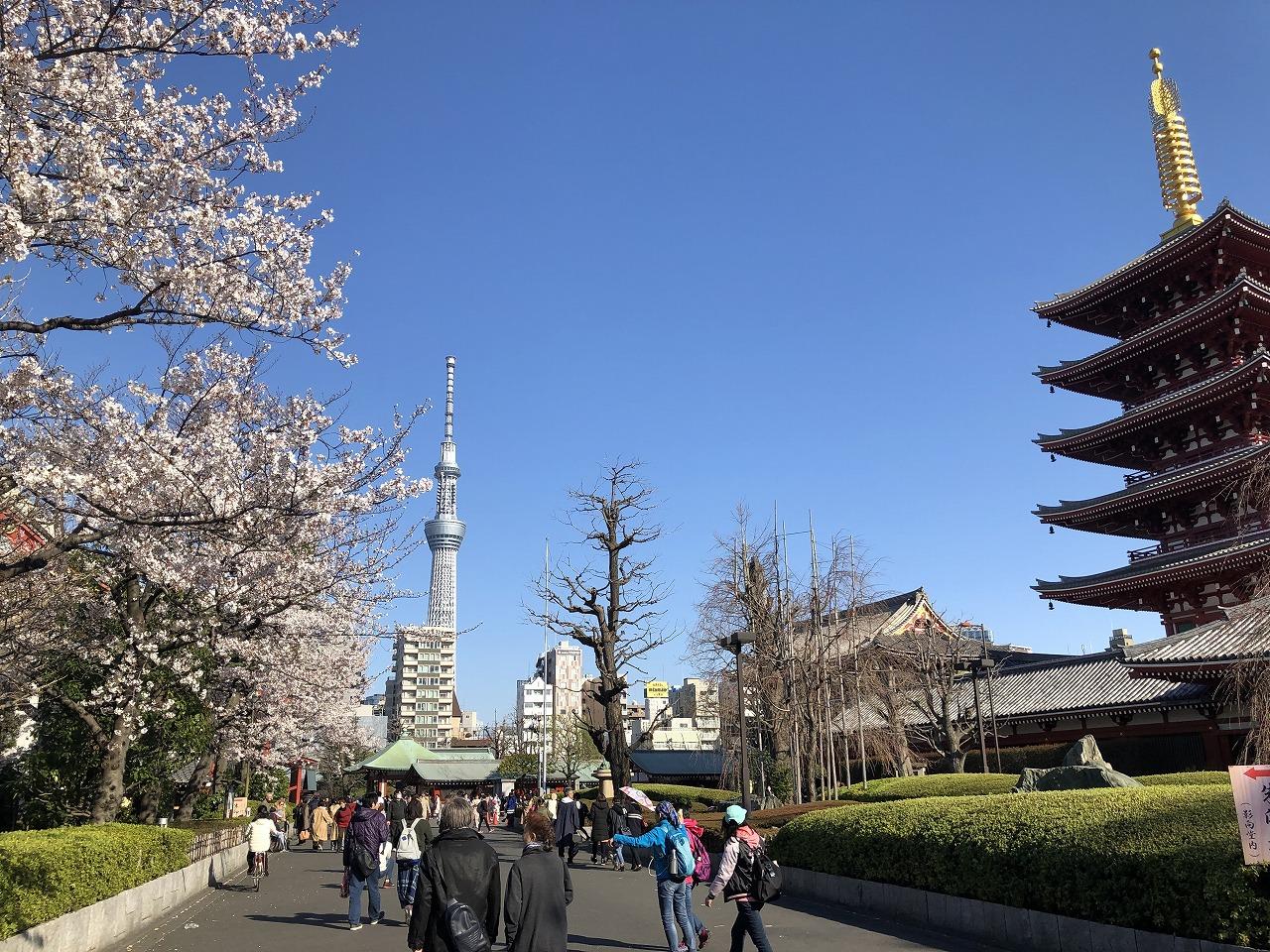 浅草の見どころを巡る桜散歩