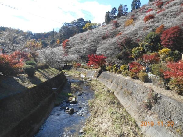 四季桜の里(川見地区)の絶景