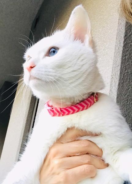 """愛猫""""ちょっくら""""は元気です!"""