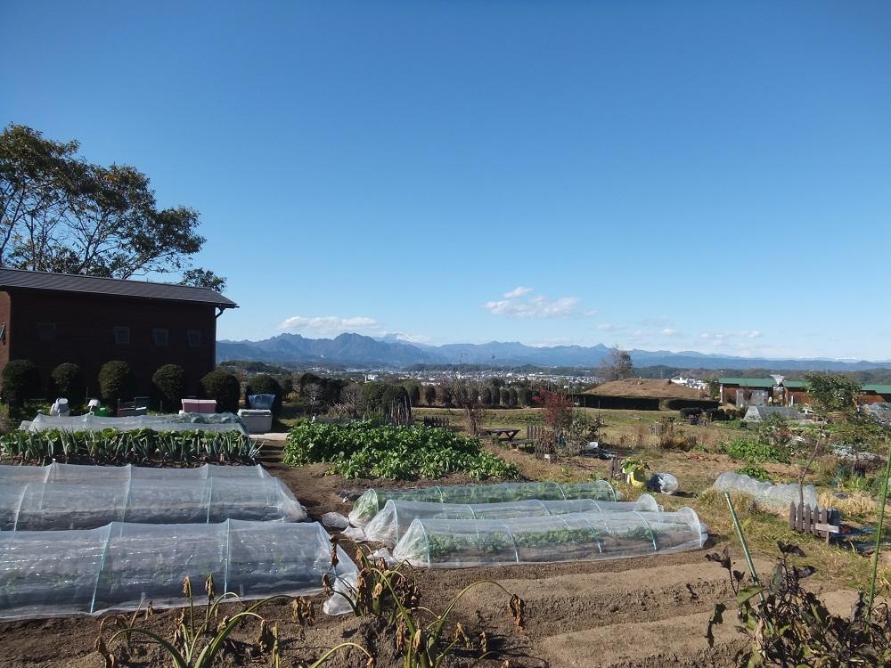 7年間続けた、50坪の農園