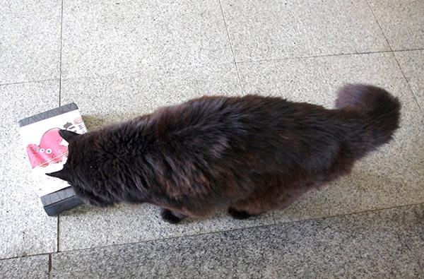 那珂湊駅の駅猫・おさむをたこめしの空箱でおびき寄せる