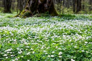 7月 涼やかな小石川後楽園で夏の花を楽しむ水辺散策