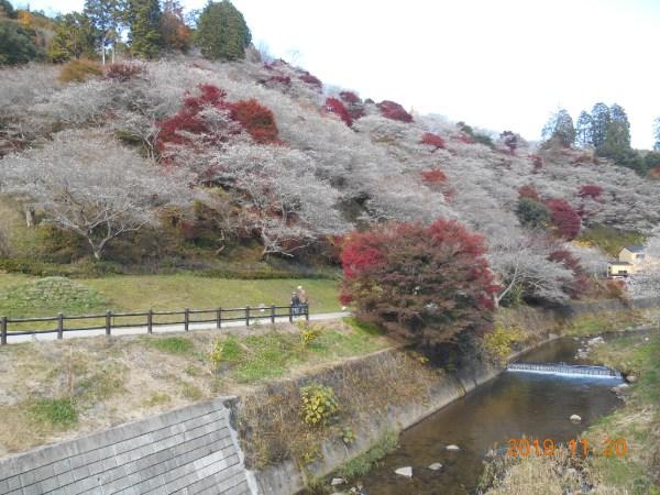 四季桜の里 2人で記念に1枚