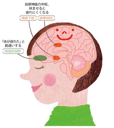 疲れるときの脳の仕組み