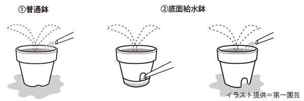 カーネーションの水のやり方