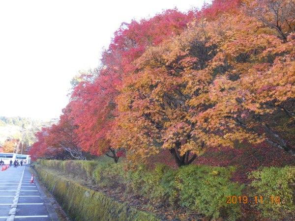 小原ふれあい公園 駐車場の紅葉