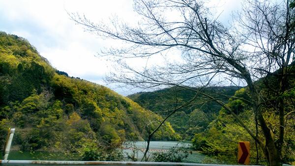 通所リハビリへの山道。とりどりの芽吹きの色が美しい。