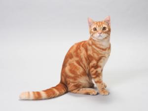 猫はどうして猫背なの?