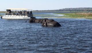 河を渡って中州へ行く象とサファリーボート