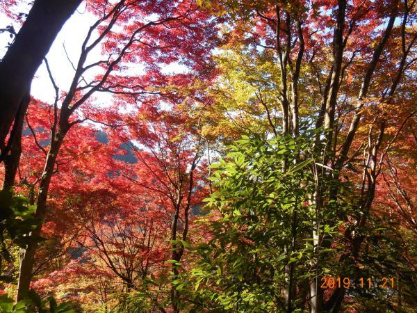 足助の観音山の紅葉