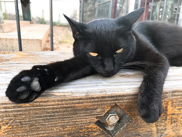 人懐こい黒猫。ピンクの首輪をしていた