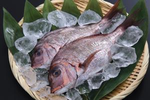 春が旬の魚にはどんなものがあるの?