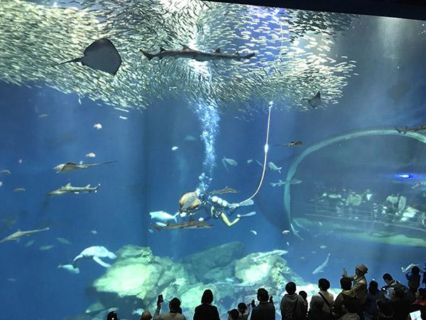 出会いの海の大水槽のアクアウォッチングタイム