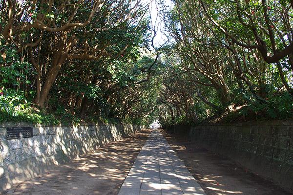 酒列(さかつら)磯前神社の約300mに渡る樹叢(じゅそう)