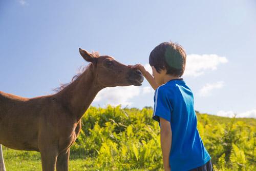 馬とのふれあい