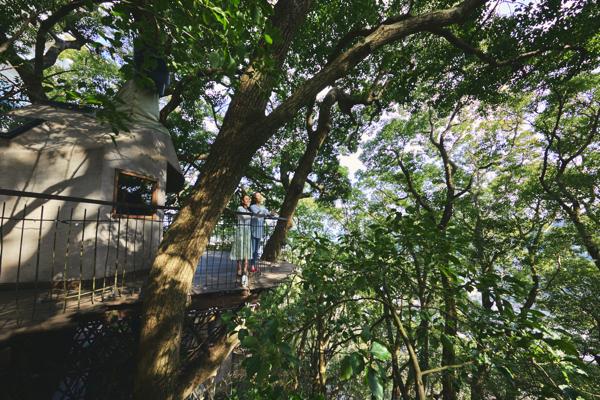 大人は童心に帰り子どもは冒険家になれるのがツリーハウスの魅力