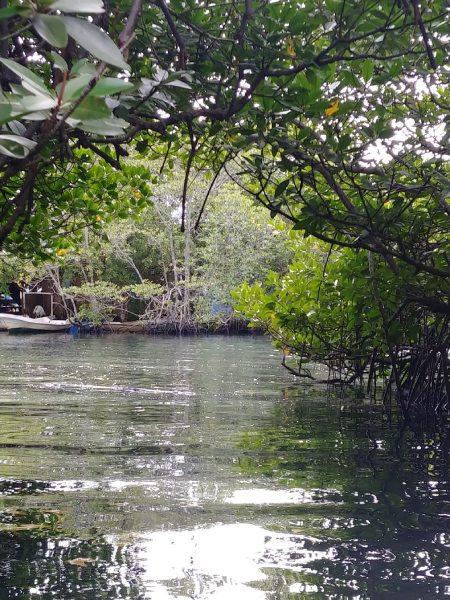なかなか見ることができないマングローブの密林。これがなかなか神秘的で不思議な感覚に陥ります。エンジンの付いた船では運航できないので小舟で周遊。これぞリアルジャングルクルーズ
