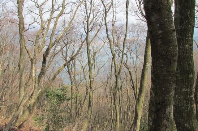 木立の合間から余呉湖が見える