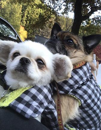 キャンピングカーは犬と一緒がいい!!