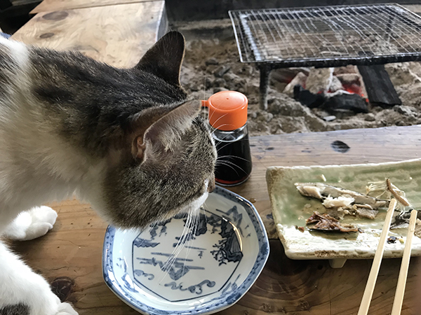 宿の飼い猫、ちびちゃん